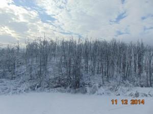 Елементарне непогоде у Зајечарском округу