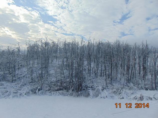 Шуме и воћнаци у околини села Рујиште су претрпели велику штету